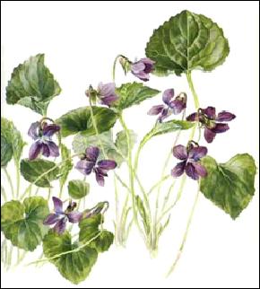 violets blue png